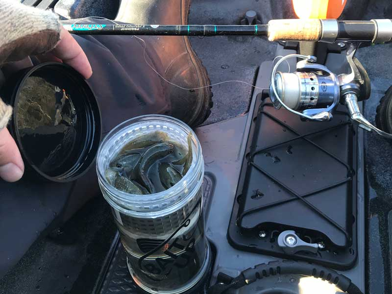 bait up container with minnow