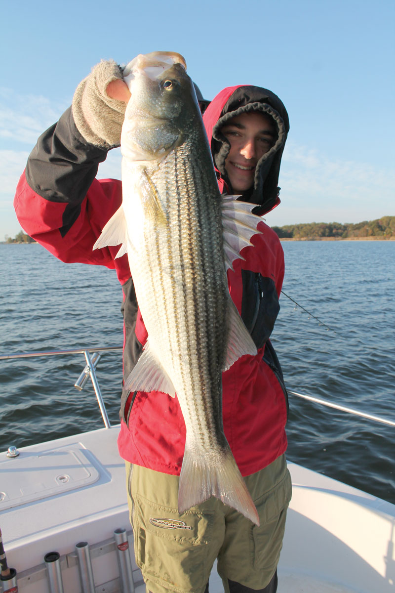 At this time of year, many stripers prowl the mouths of tributaries on the hunt for peanut bunker. This one was in the mouth of the South.