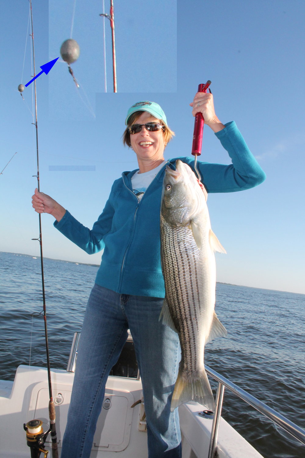 striper caught chumming