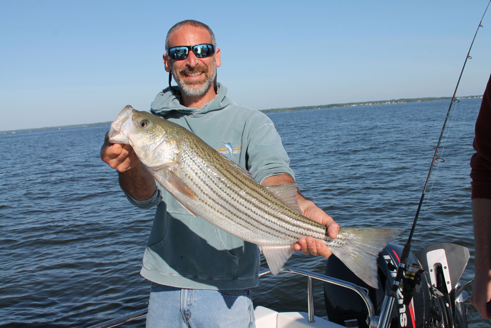 chum attracts striped bass to the boat