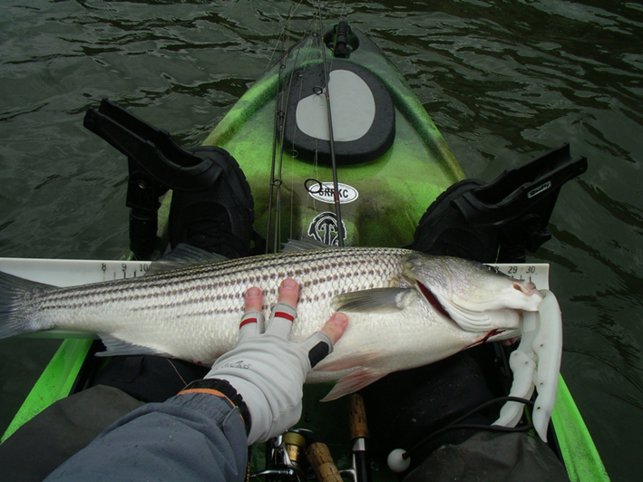 trolling for stripers from a kayak