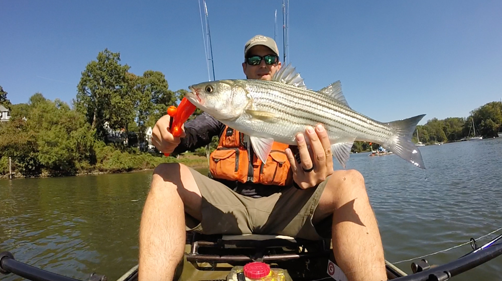 fishing for striped bass from a kayak