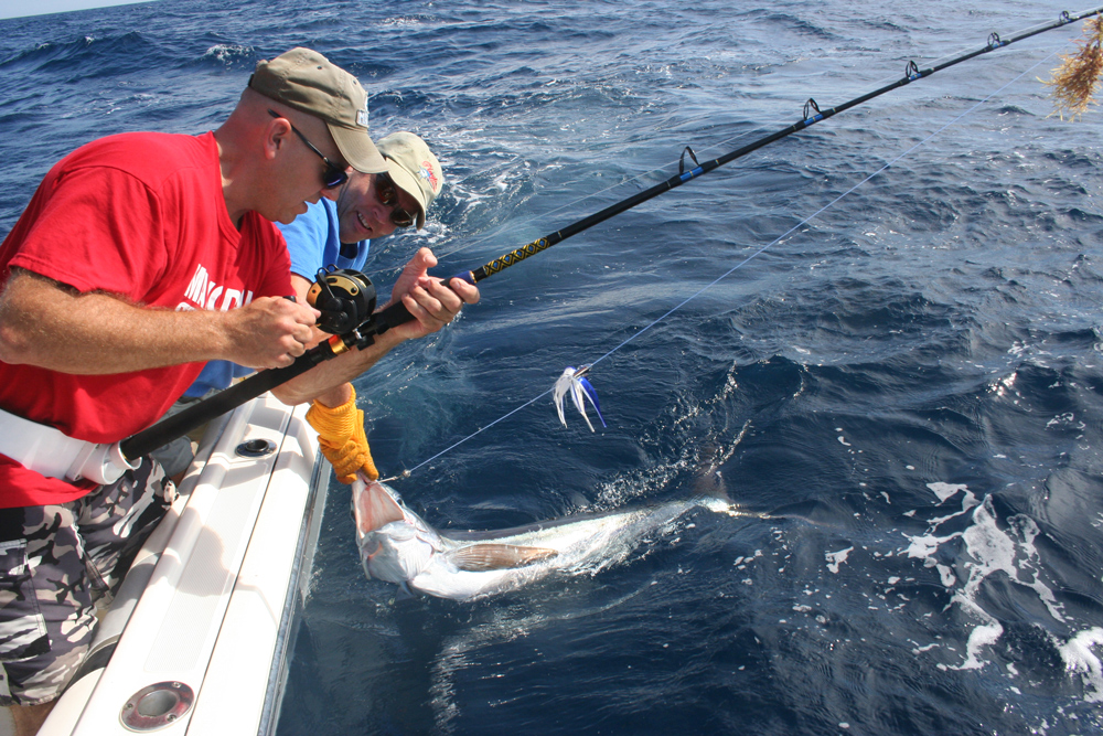 releasing a white marlin