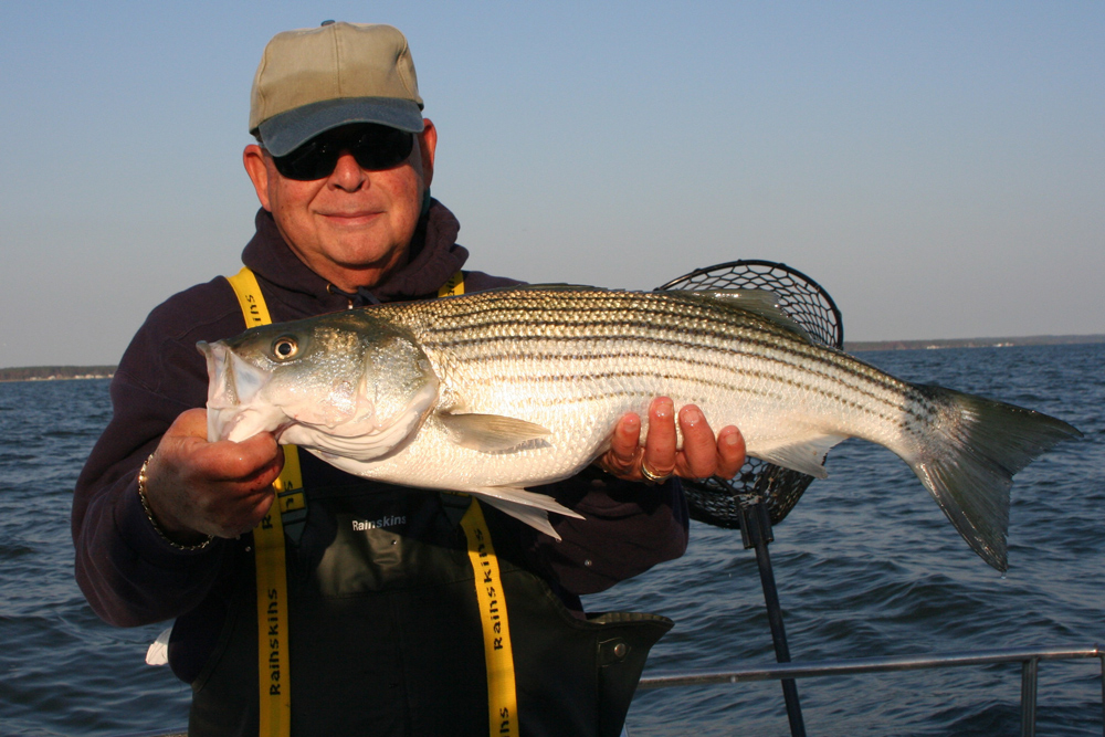 catch and release striper