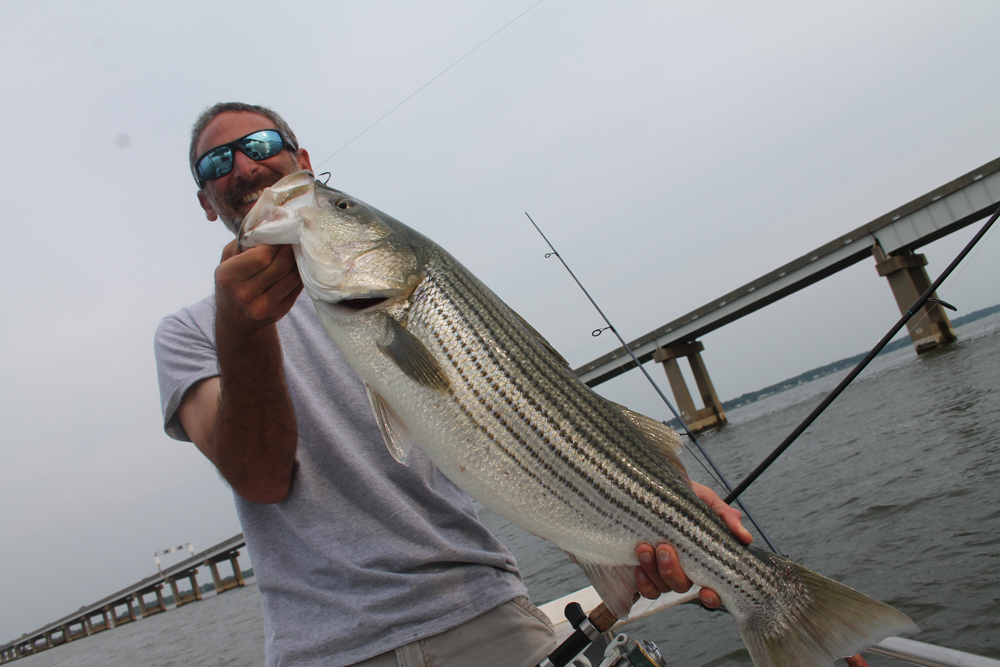Jigging the chesapeake bay bridge pilings fishtalk magazine for Striper fishing chesapeake bay