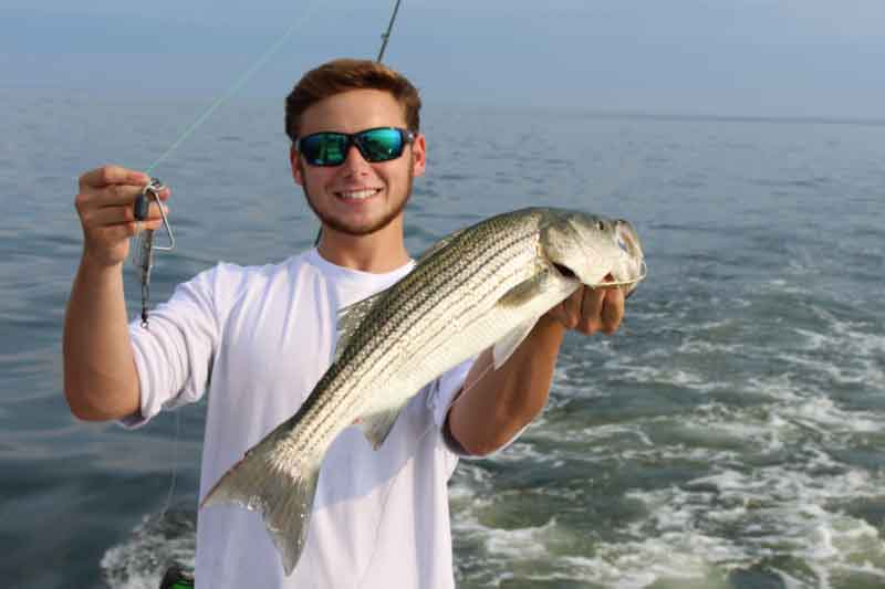striped bass caught on planer
