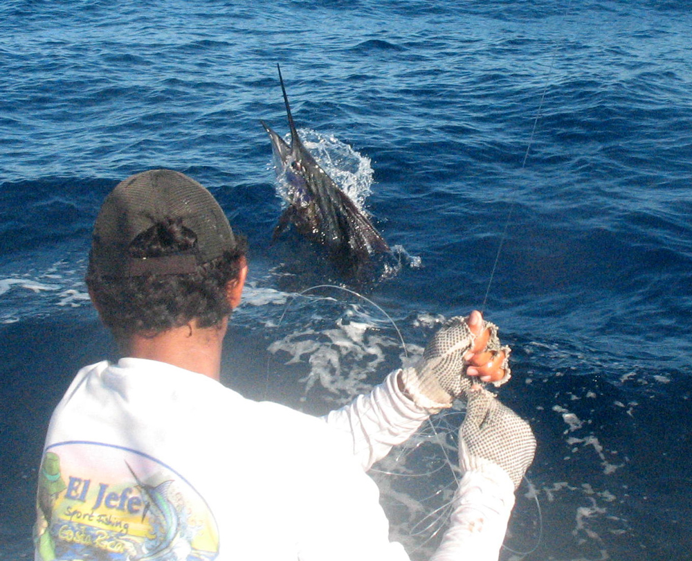 catching a sailfish in costa rica