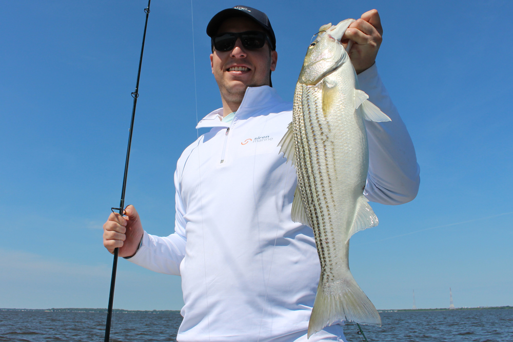 Siren Marine rep catches a striper