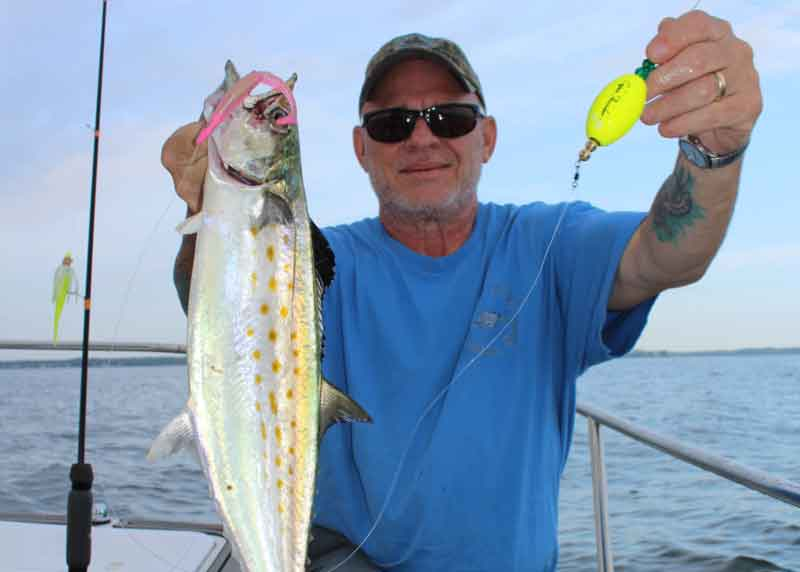 angler caught spanish mackerel