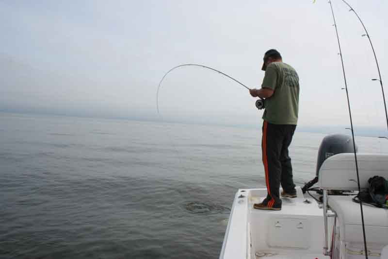 Spring Fly Fishing the Chesapeake