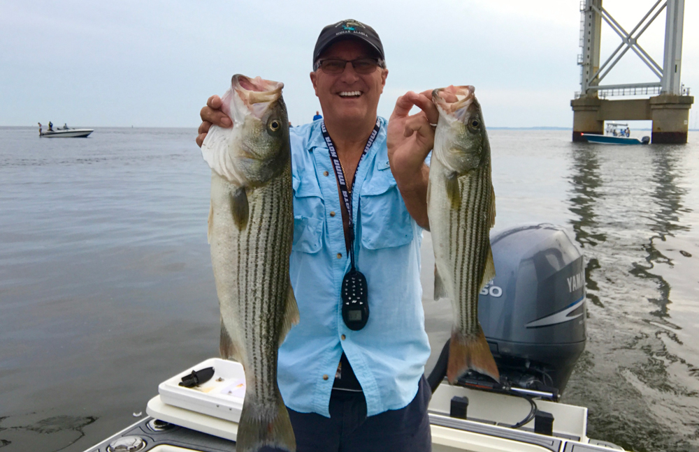 june 2017 upper chesapeake bay fishing report fishtalk