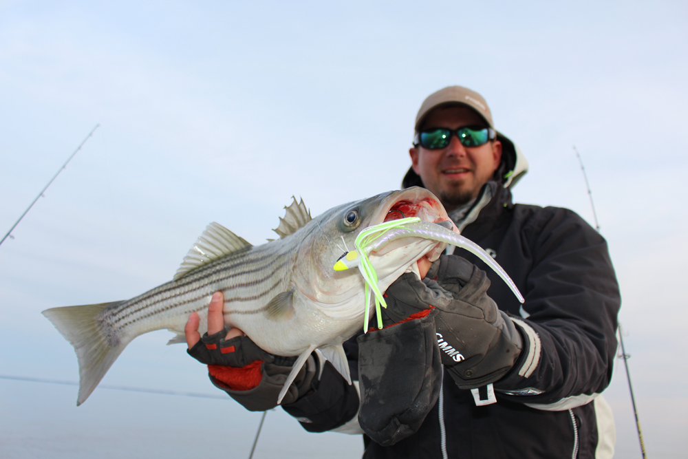 caught a nice striper while fishing the chesapeake bay