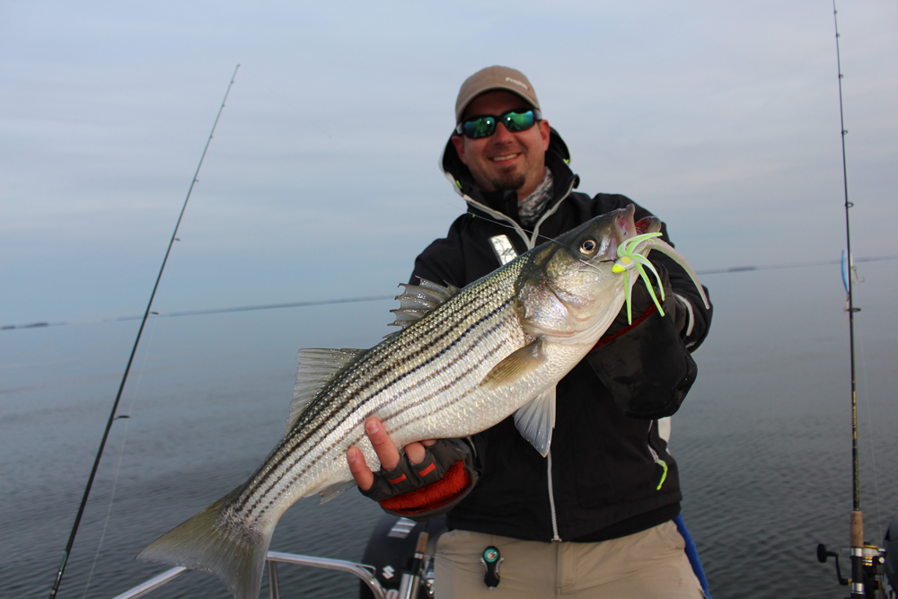 striped bass suspending