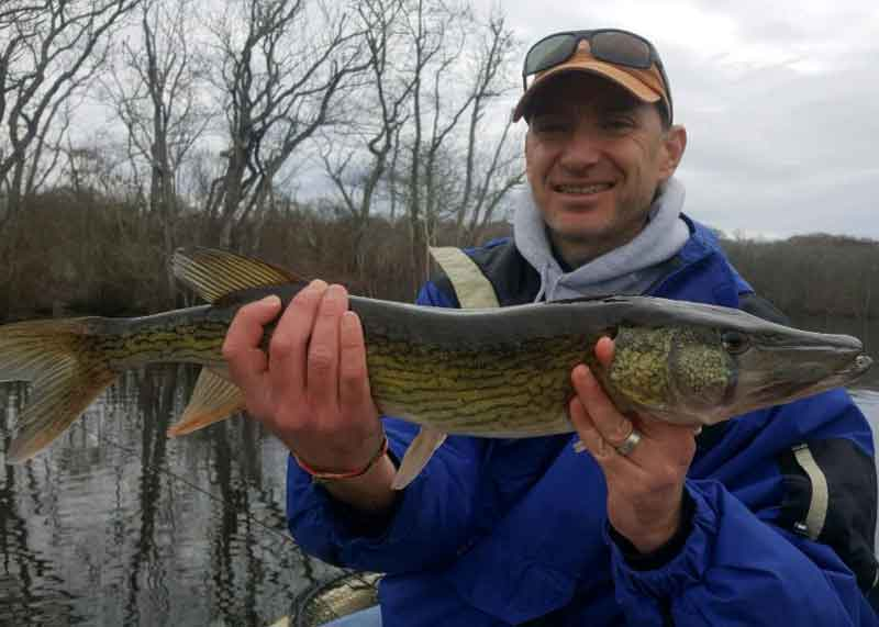 pocomoke pickerel