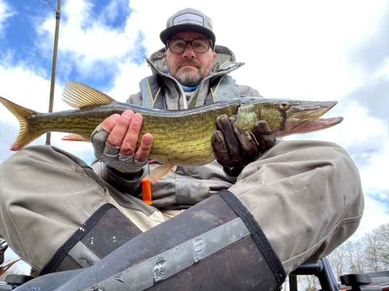 pickerel angler