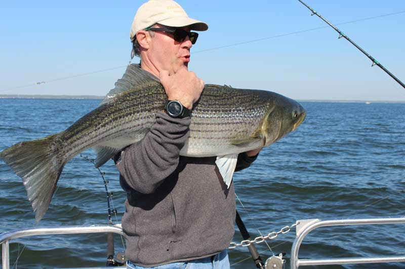 trolling gear used to troll for striped bass