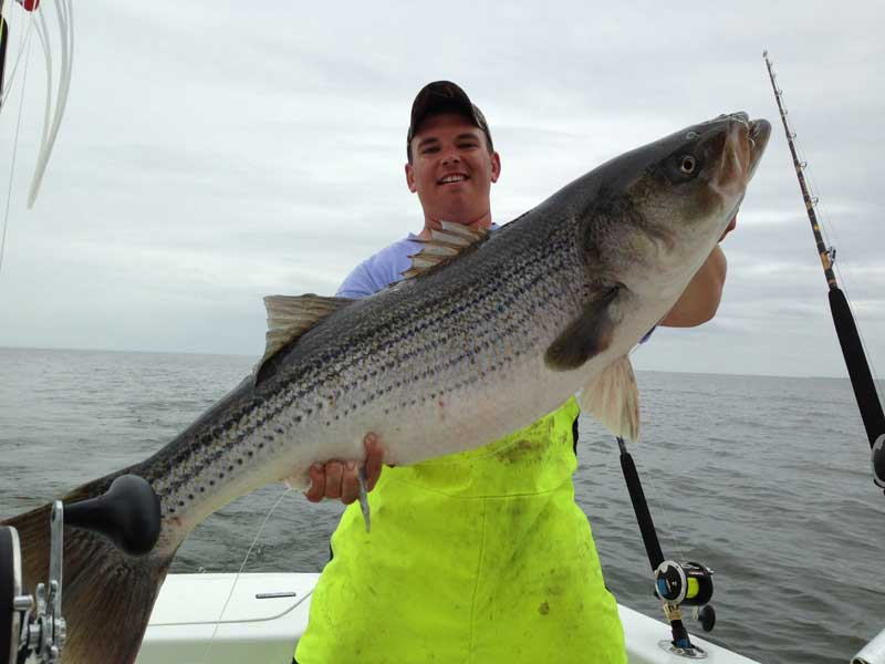 trophy sized striped bass on chesapeake bay