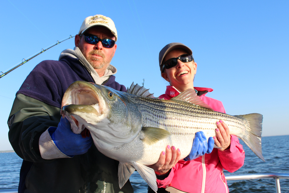 giant rockfish caught in chesapeake