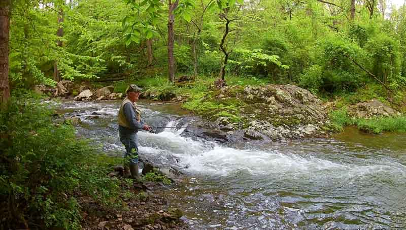 The Catoctin Trout Gig