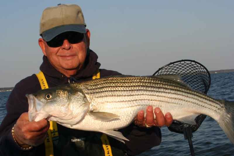 striped bass angler holding up fish