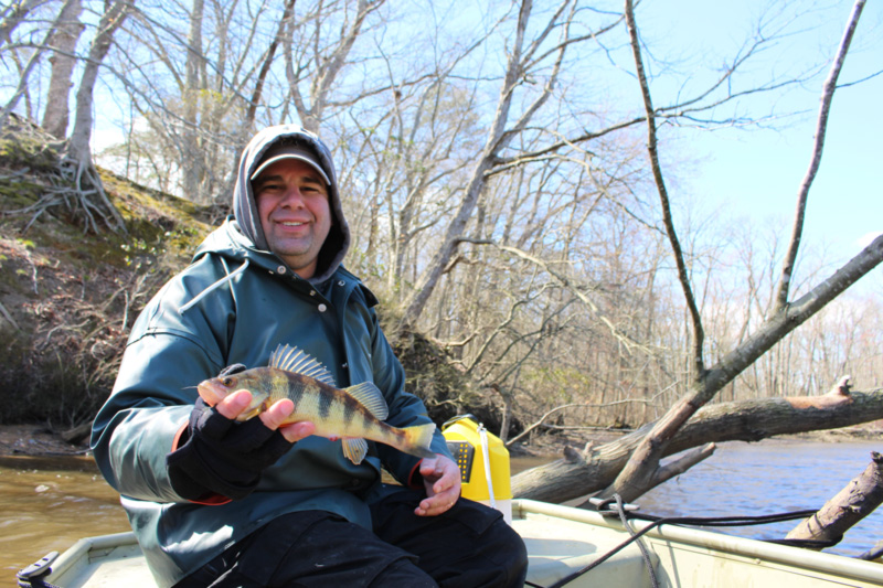 yellow perch fishing